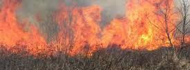 Vypaľovanie suchých trávnatých porastov v jarnom období