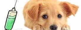 Vakcinácia psov a mačiek proti besnote